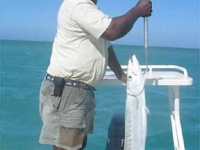 Fishing Guides in Turks and Caicos