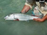 Turks Bonefish Guide