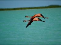 Turks and Caicos Birding