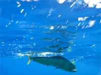 Turks and Caicos Fishing Charter