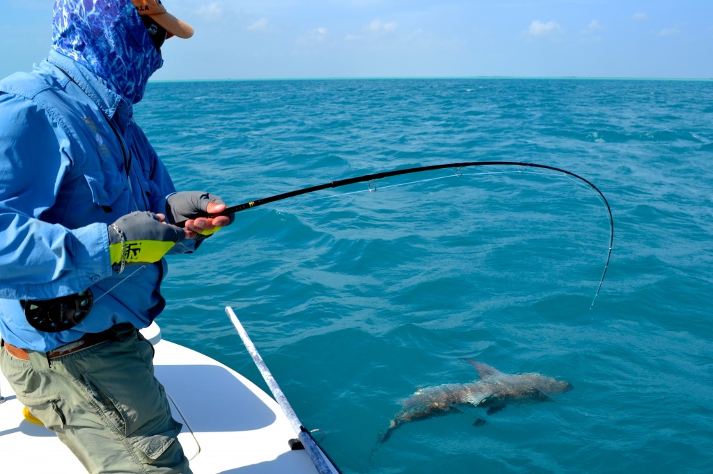 World record shark bonefish unlimited turks caicos for Turks and caicos fishing